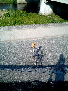 自転車に座るネコ
