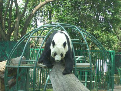 Zoologico1.jpg