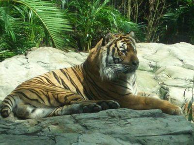 Zoologico2.jpg