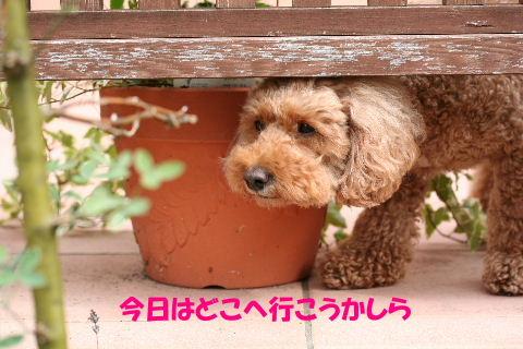 2009_09280018.jpg