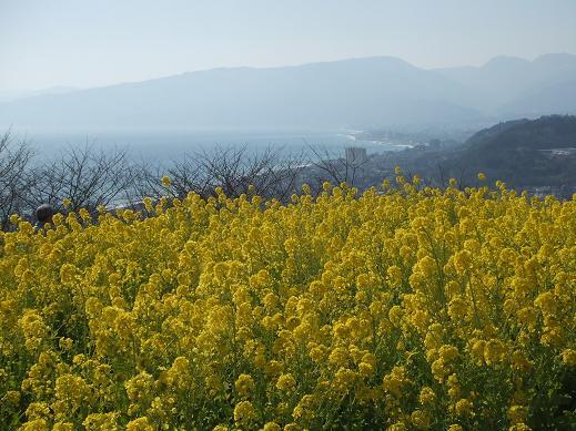 春の景色3