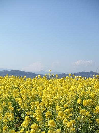 春の景色4
