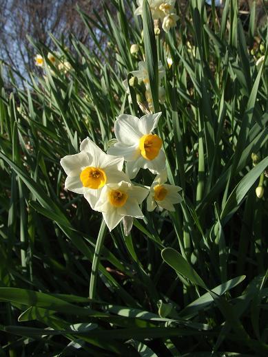 春の景色2
