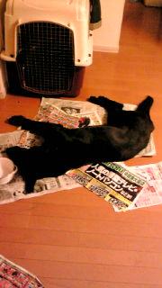 新聞と一体化する、真狼