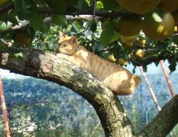 果樹園の猫