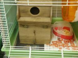 ナッツの巣箱1
