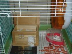 ナッツの巣箱2