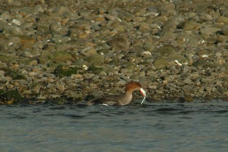 juv-fishcatch