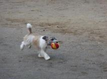9月17日公園でのボール遊び-3