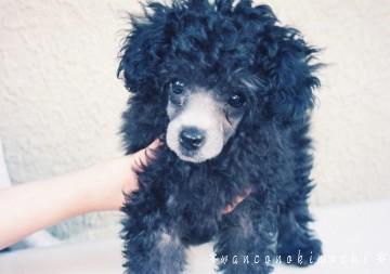 えあちゃん幼犬期(ブログ)