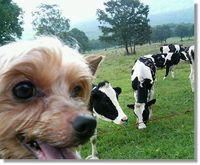 牛が近づいてきた~~!
