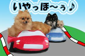 drive-pome4.jpg