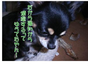 20071126012513.jpg
