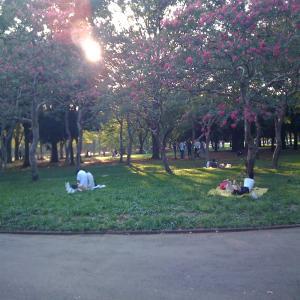IMG_0328_convert_20090920170500Yoyogi Park