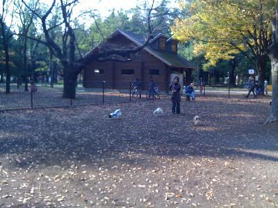 Yoyogi Park Dogrun