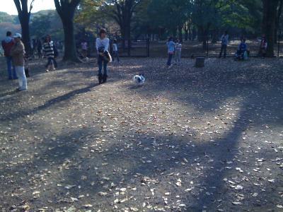 Yoyogi Park Dogrun4