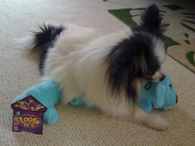 Loofa Dog3
