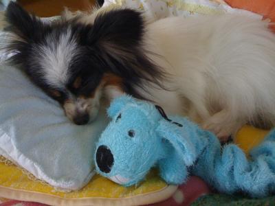 Loofa Dog5