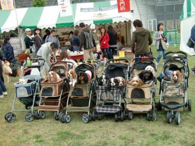 Dogrun Festa12