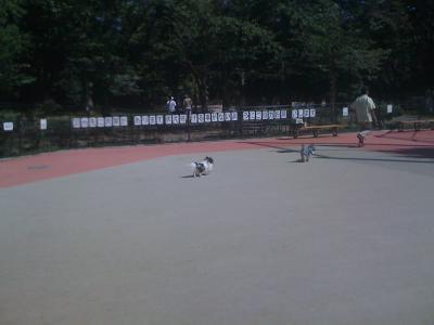 駒沢公園4