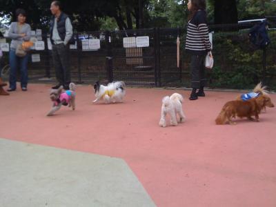 @駒沢公園