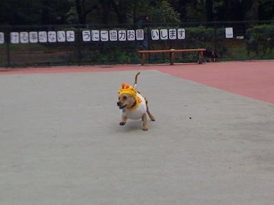 @駒沢公園2