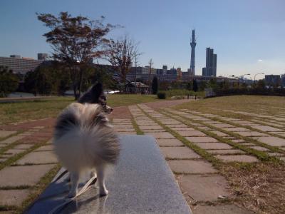 Nov3汐入公園7