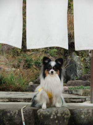河津桜まつり10