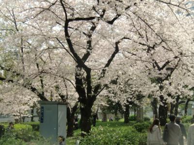 隅田公園桜並木