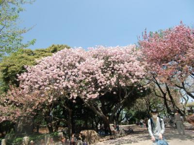飛鳥山公園6
