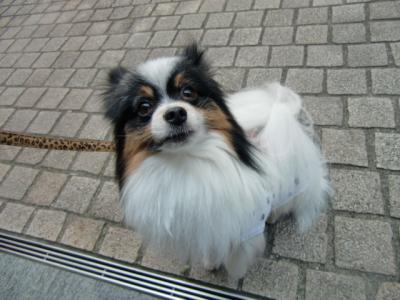 Tokyo Dog Jack_Roppongi Hills2