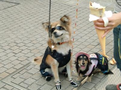 Tokyo Dog Jack_Roppongi Hills4