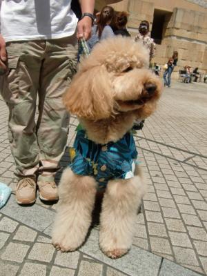 Tokyo Dog Jack_Roppongi Hills5