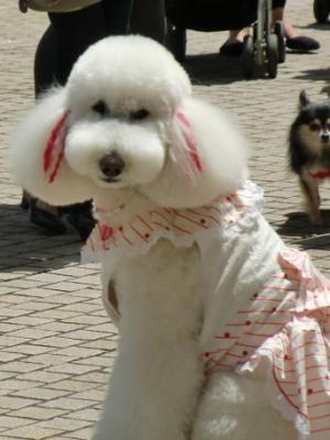 Tokyo Dog Jack_Roppongi Hills6