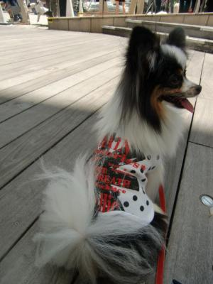 Tokyo Dog Jack_Roppongi Hills8