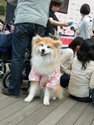 Tokyo Dog Jack_Roppongi Hills10