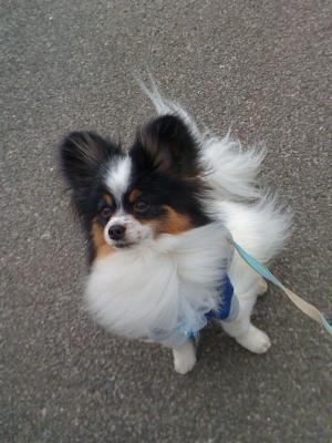 DogSalon4.jpg