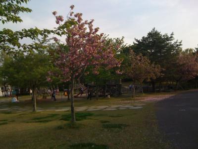FloraRoi2.jpg