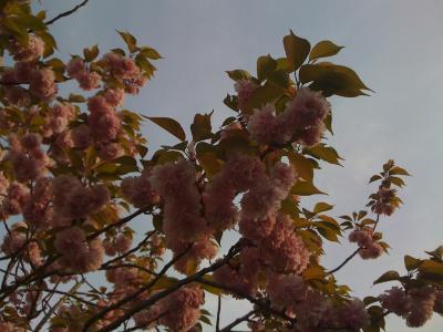 FloraRoi3.jpg