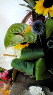 夏のお花1