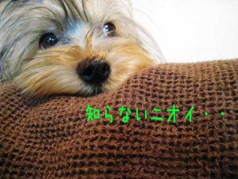 018_20081002213136.jpg