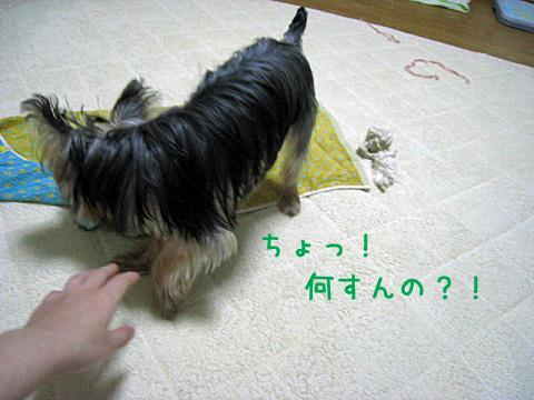 020_20080927203451.jpg