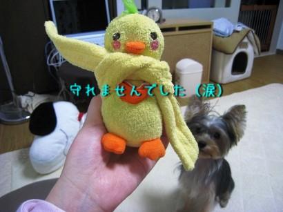 031_20081005202929.jpg