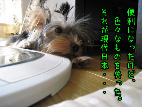 041_20080918132058.jpg