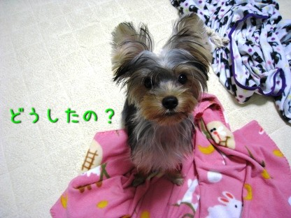 049_20081005202935.jpg
