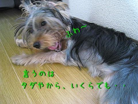 あくびIMG_6958