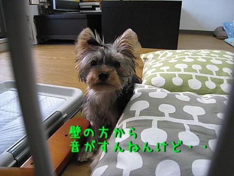 IMG_5425.jpg