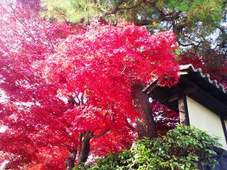 arashiyama5.jpg