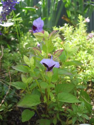 My庭の花 032-blog