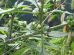My庭の花 037-blog